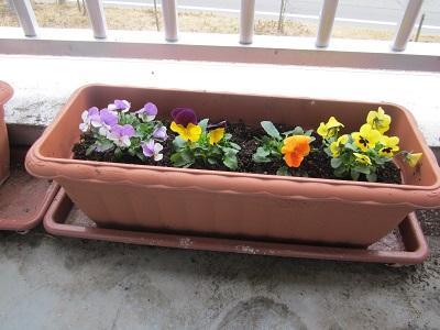 かがやきの丘 北棟リハビリ「北棟にも春のお花が咲きました♪」