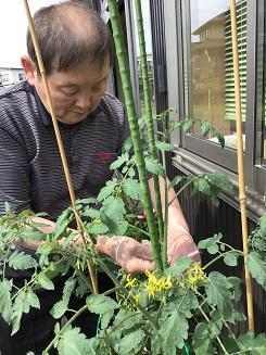 ★湖山ケアサービス米沢★野菜や花の育て方