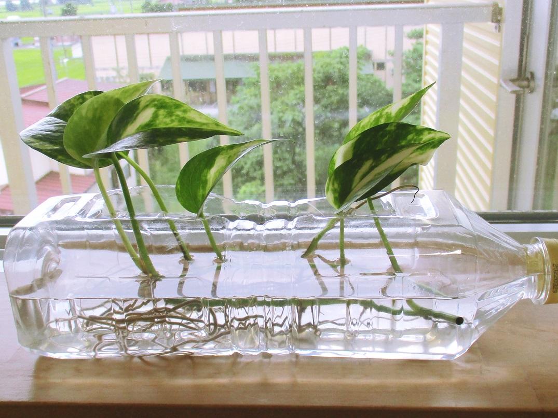 川西湖山病院 看介護部「密かな楽しみ~病室で植物栽培🌱~」